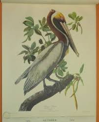 This means that if northwestern mutual collects more. 1959 Northwestern Mutual Insurance Co Calendar 4 Large Audubon Bird Prints 220702446