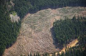 Logging In Upper Skagit River Watershed Put On Hold As Seattle Has