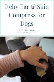 Ear & Skin Compress Home Remedy for Itchy Dogs | The DIY Dog Mom
