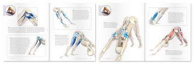 an excerpt from yoga mat panion 4 anatomy for arm balances and inversions