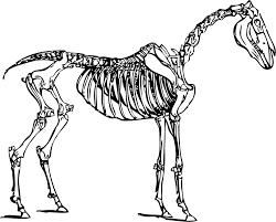 Small Picture Free Dinosaur Bones Clipart Image 6275 Dinosaur Bones Clipart