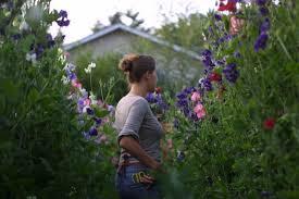 diy sweetpeas cutting garden 2 gardenista