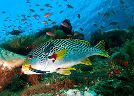 marine life underwater photography guide marine life underwater