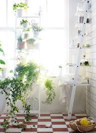 Bathroom Window Garden Ideas