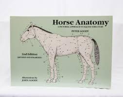 Anatomy Of Horse Chart