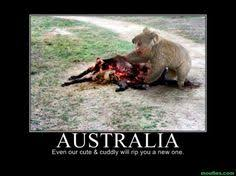 Australia!!! My home country! on Pinterest | Australia, Koalas and ... via Relatably.com