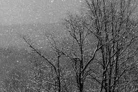 black and white snow photography. Plain Snow Snow Is Gorgeous In Black And White Thereu0027s Often Little To Be Gained By Snow  Pictures Color For Black And White Photography 4