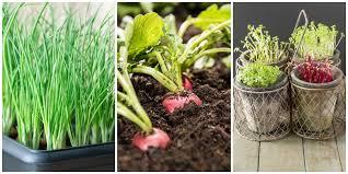 indoor vegetable garden ideas how to
