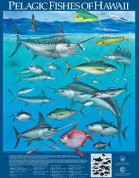 Oahu Fish Chart Division Of Aquatic Resources Education