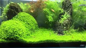ada cube garden 60p