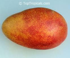 Full Size Fruit Trees For Sale