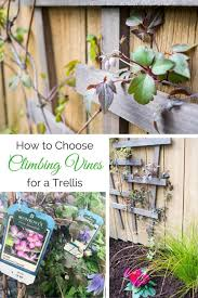 How Plants Climb Climbing Plants Trellises Vines Gardeneru0027s SupplyClimbing Plant Trellis