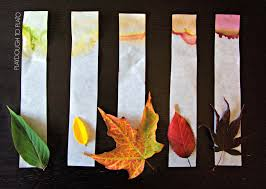 chromatography. what an awesome kids science experiment for fall!! see how the leaves make their chromatography a