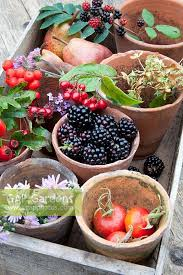 autumn fruit and flower collection in an old wooden seed tray pear williams