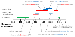 Hominin Chart We Just Got New Clues About The Denisovans Ancient Humans