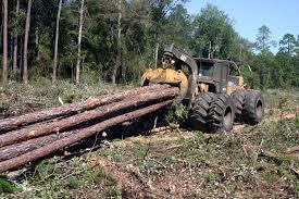Hitree Logging Swamp Specialist
