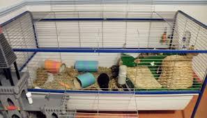 house my indoor guinea pigs
