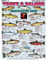 Freshwater Fish Identification Chart How To Identify Freshwater Species Shad Perch Walleye