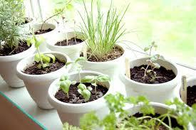 apartment herb garden. Blog Apartment Herb Garden