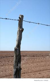 wire farm fence. Old Ranch Fence: Barbed Wire Farm Fence And Cultivated Farmland In Spring.