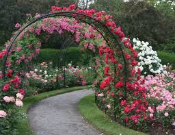 Small Picture Backyard Rose Garden Design Home Design Ideas
