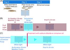 Fluorescent Lights Anxiety Reddit Novel Zebrafish Behavioral Assay To Identify Modifiers Of