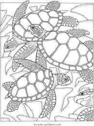 Small Picture Best 25 Turtle coloring pages ideas on Pinterest Kids coloring