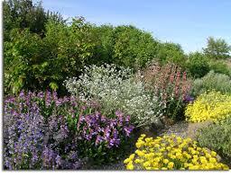desert yellow daisy blue mist penstemon barrettï ½s penstemon elia desert penstemon oregon sunshine