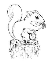 Small Picture Squirrel Outline Printable Coloring Coloring Pages