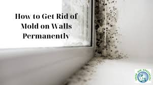 get rid of mold on walls permanently