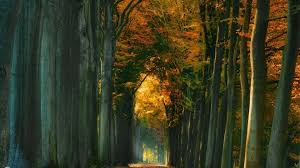 desktop wallpapers forest landscape hd wallpapers fresh air people road nature mobile phone woods autumn tree path free images forest