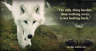 Quotes About Wolves 40 Quotes Fascinating Women Who Run With The Wolves Quotes