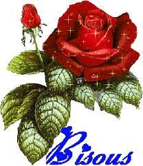 """Résultat de recherche d'images pour """"rose d'amour"""""""