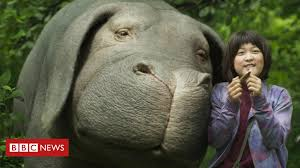 Okja: A genetic <b>super pig</b> and the environment - BBC News
