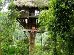 Exotic Tree Houses Large Tree Houses With Exotic Wooden Shape Near The River For