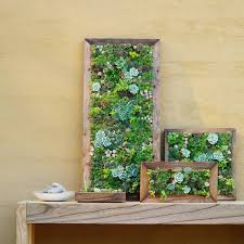 original diy wall decoration ideas succulents in picture frames
