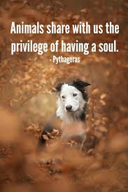 Pet Quotes New All Animal Lovers Know That Animals Have A Soul Wwwhillsidevetsco