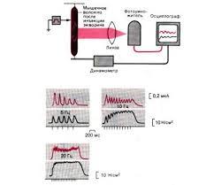 Реферат Биофизика мышечного сокращения all referats com Сайт  Рис 7 Опыт демонстрирующий внутриклеточное высвобождение Са2 в мышечных волокнах Люминесценция красные кривые и развитие изометрического напряжения в