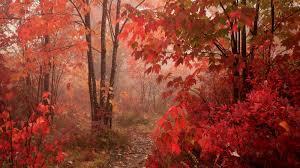 Fall Leaves Wallpaper for Desktop ...