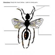 Image result for poem  prehension for grade 1   WORKSHEETS also  likewise Insects at EnchantedLearning in addition Classroom Fun  Insect or Not  Freebie as well Life Cycle Worksheets   Have Fun Teaching likewise Animal Math Worksheets at EnchantedLearning together with Incredible Insects  7 Bugged Out Worksheets   Education together with  moreover Insect Worksheets   Have Fun Teaching in addition Insects Life Science Reading  prehension Worksheet additionally Second Grade  Insect Research Project   Crazy4 puters. on bugs 2nd grade math worksheets