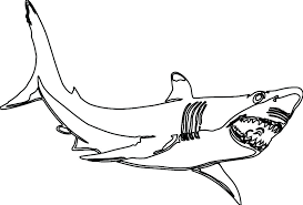 1024x694 shark printable coloring pages exciting coloring page tiger print