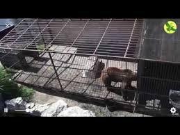 Петиция · Обращение к Президенту о спасении львов и ...