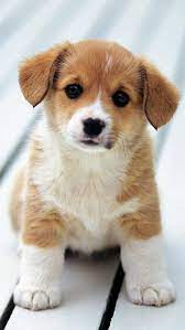 Innocent Puppy Hd Wallpapers Download ...