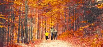How To Explain Why Leaves Change Color In The Fall | Fatherly