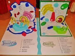 animal cell project ideas middle school. Image Result For Animal Cell Project Ideas Middle School With