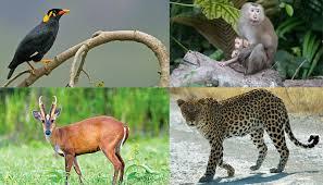 flora & fauna of mizoram के लिए चित्र परिणाम