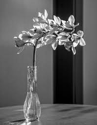 vase lighting. Black And White Photography Flower Glass Vase Lamp Monochrome Lighting Still Life Cool Image