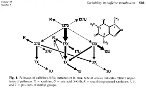 Arguably, there will be more caffeine, because some of the water will evaporate, increasing the concentration of caffeine in what's left over. How Long Does Caffeine Stay In Your System Quora