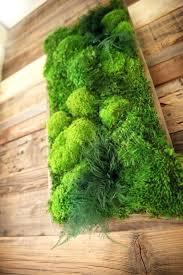 how to make live moss wall art