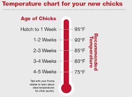 Chick Temperature Chart Giving Chicks A Strong Start Runnings